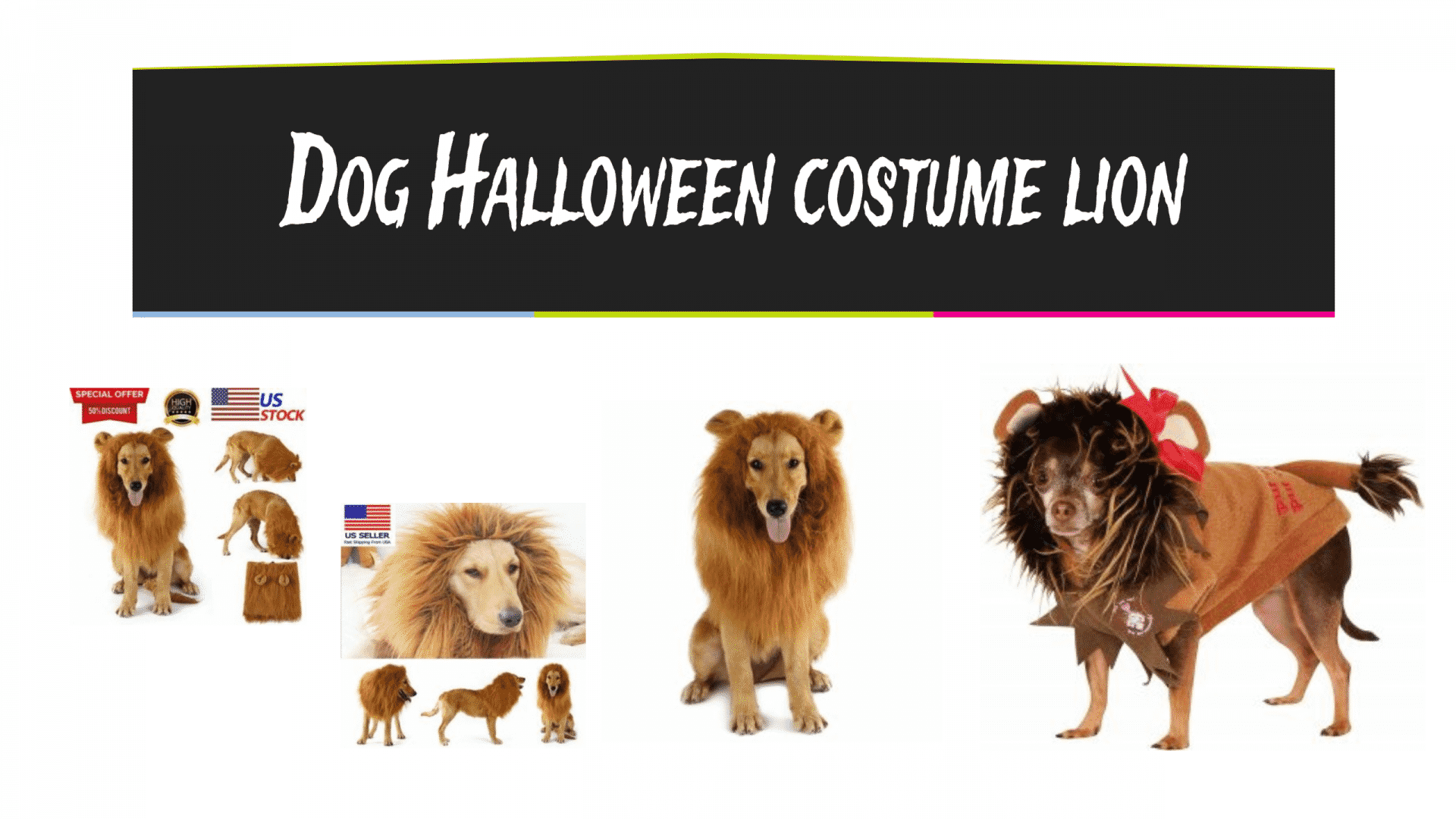 Dog Halloween costume lion